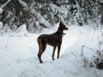 Side shot from trail Dec 17 10 sized.jpg