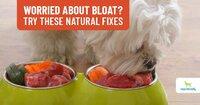 Preventing-Bloat-In-Dogs.jpg