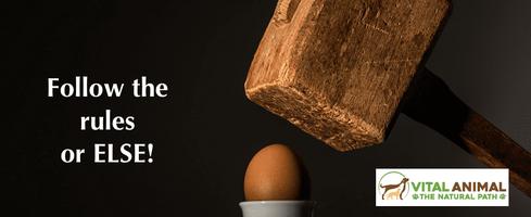 egg-hammer-brand-880x380-880x360.png