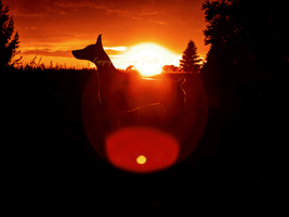Ripley Sunset copyright.png
