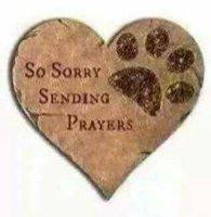 so sorry.jpg