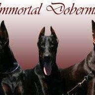 immortaldobes