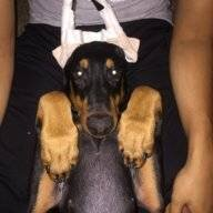 Apollo's Dobermom