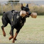 Schutzhund Nicely Explained by Video..