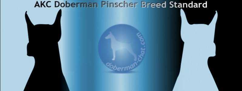 AKC Doberman Pinscher Breed Standard